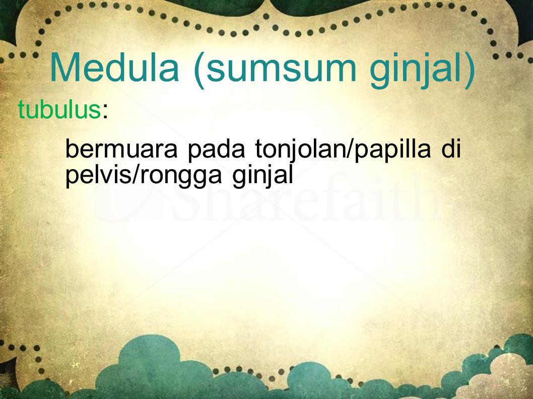 Medula (sumsum ginjal)