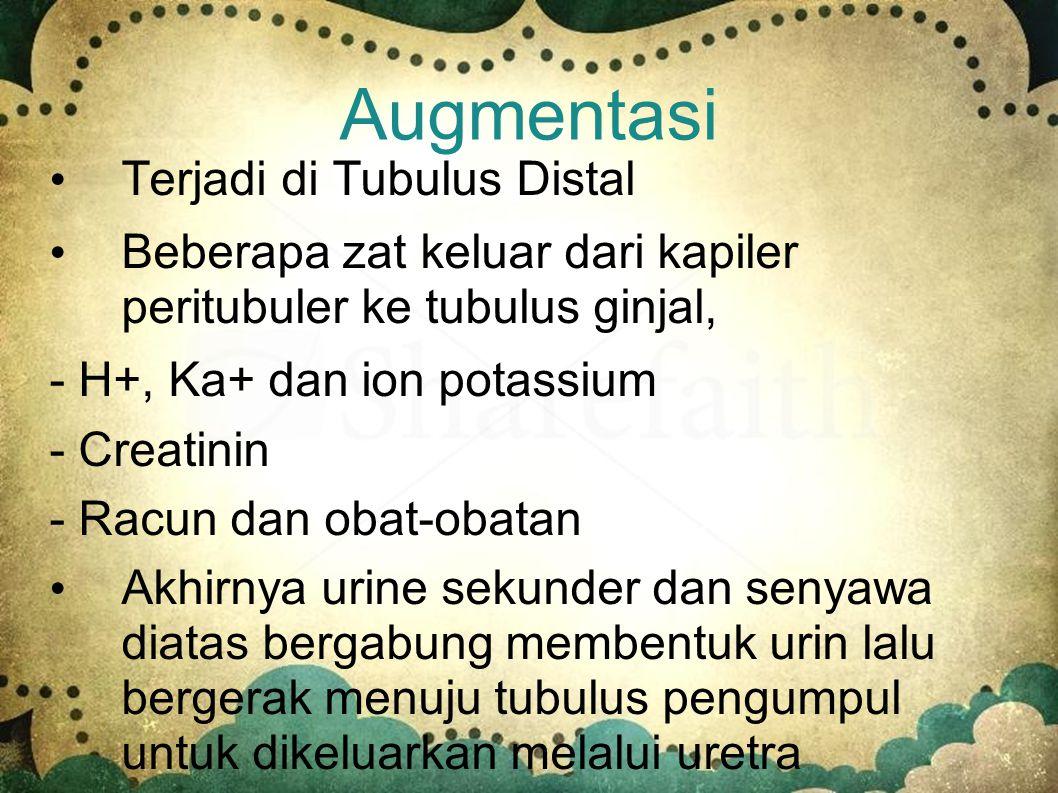 Augmentasi Terjadi di Tubulus Distal