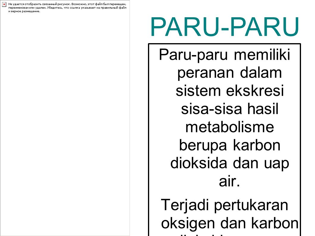 PARU-PARU Paru-paru memiliki peranan dalam sistem ekskresi sisa-sisa hasil metabolisme berupa karbon dioksida dan uap air.