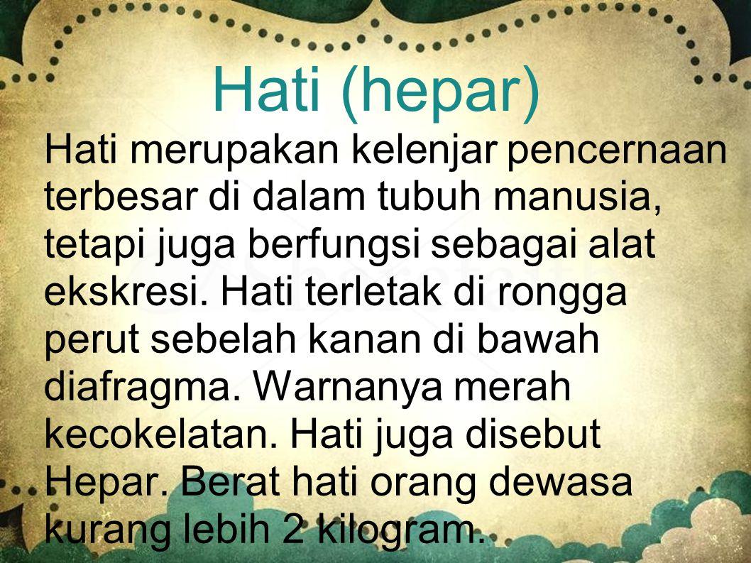 Hati (hepar)