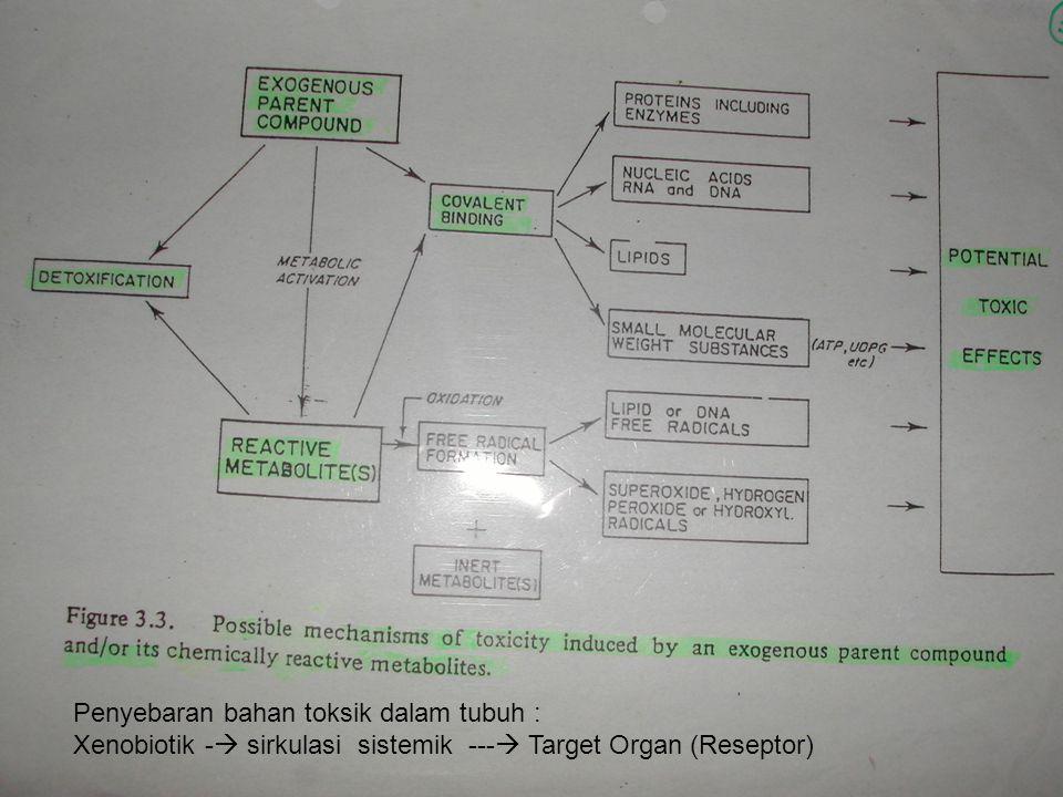 Penyebaran bahan toksik dalam tubuh :