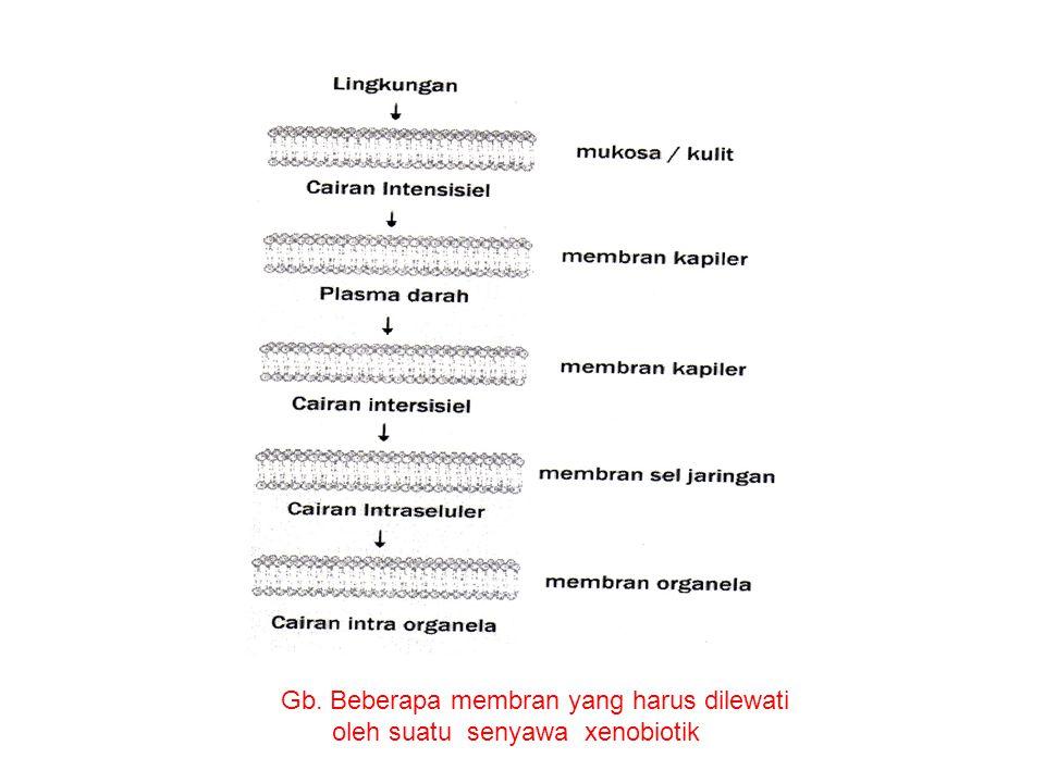 Gb. Beberapa membran yang harus dilewati