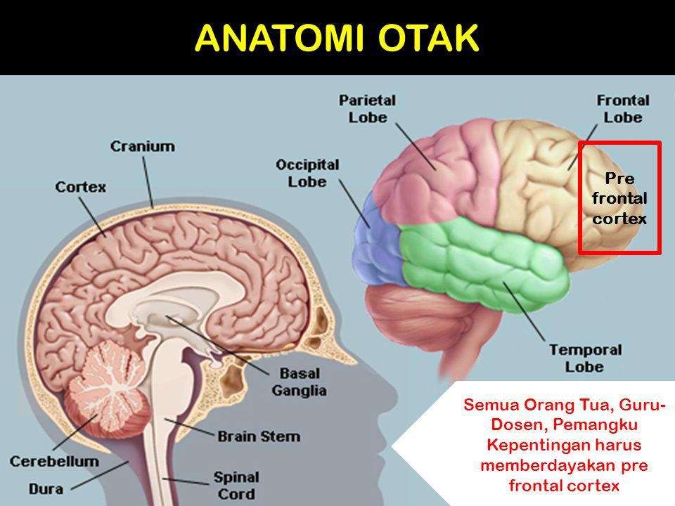 ANATOMI OTAK Pre frontal cortex