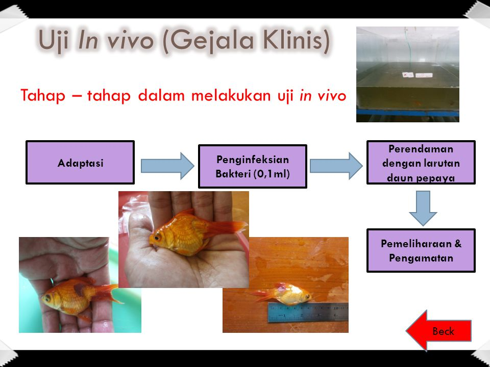 Uji In vivo (Gejala Klinis)