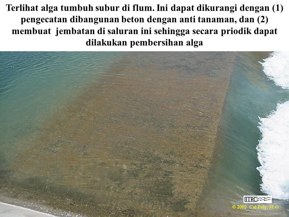 Terlihat alga tumbuh subur di flum