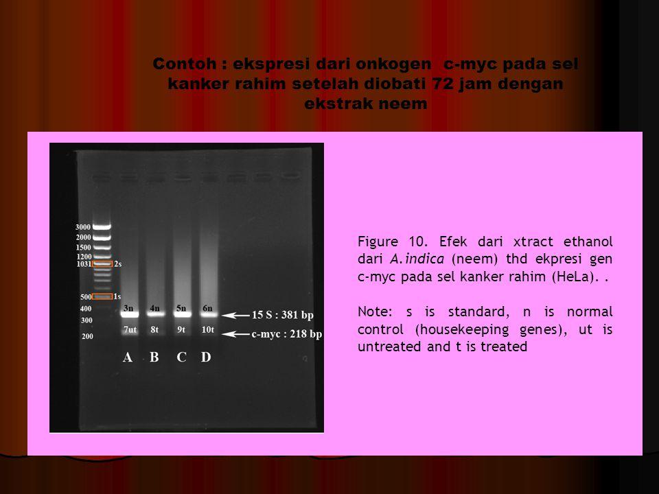 Contoh : ekspresi dari onkogen c-myc pada sel kanker rahim setelah diobati 72 jam dengan ekstrak neem