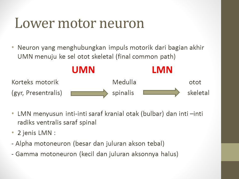 Lower motor neuron Neuron yang menghubungkan impuls motorik dari bagian akhir UMN menuju ke sel otot skeletal (final common path)