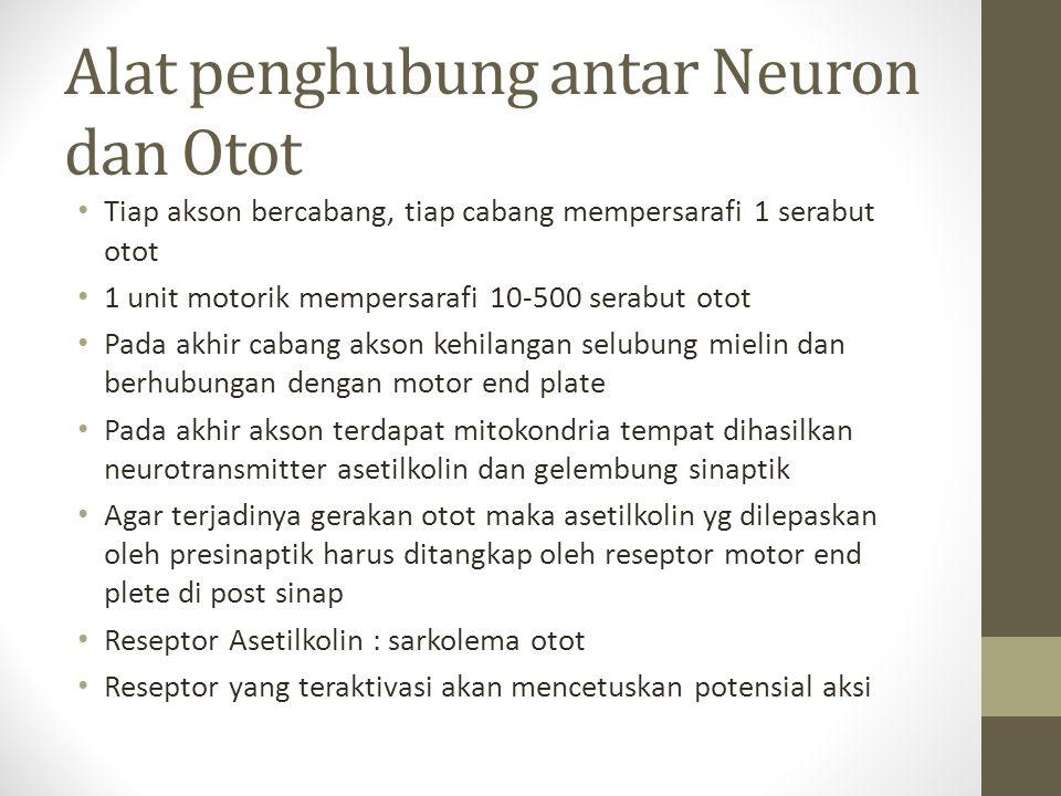 Alat penghubung antar Neuron dan Otot