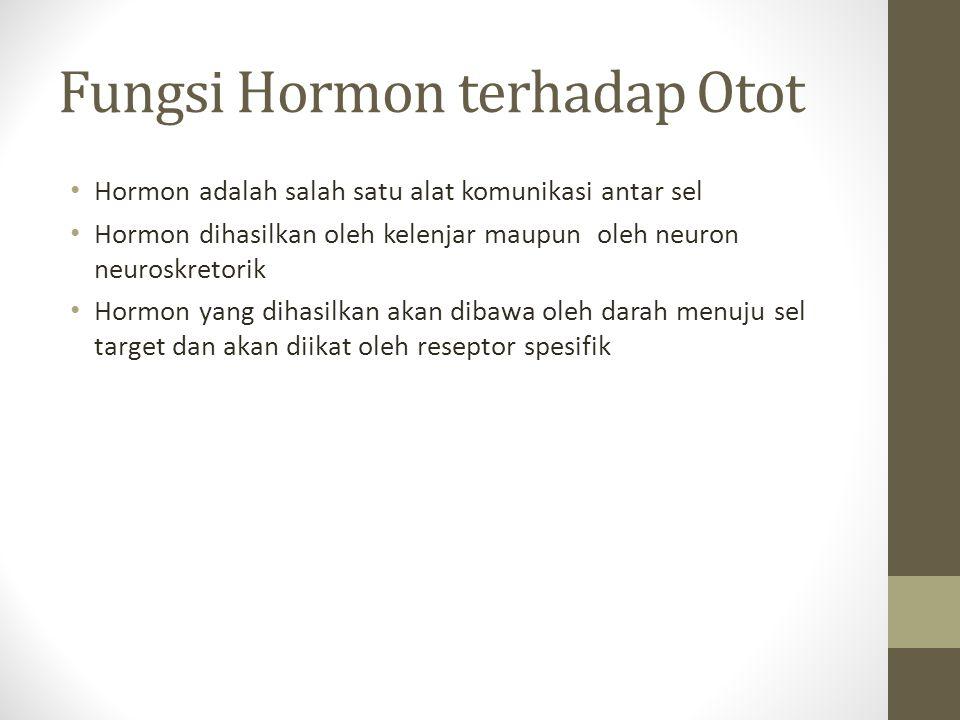 Fungsi Hormon terhadap Otot