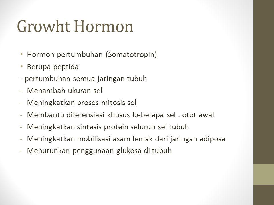 Growht Hormon Hormon pertumbuhan (Somatotropin) Berupa peptida