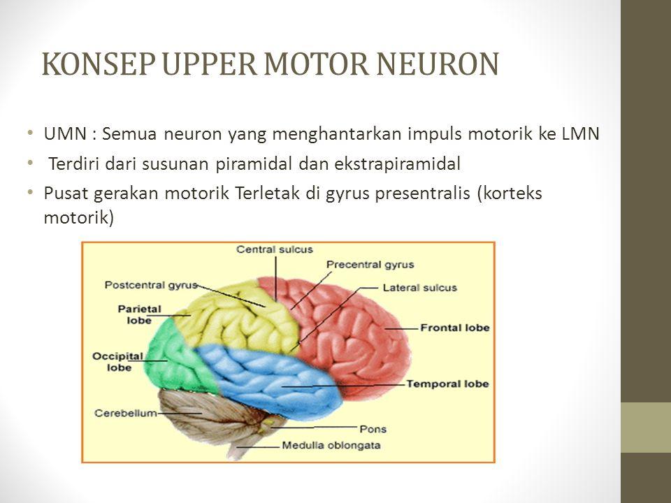 KONSEP UPPER MOTOR NEURON