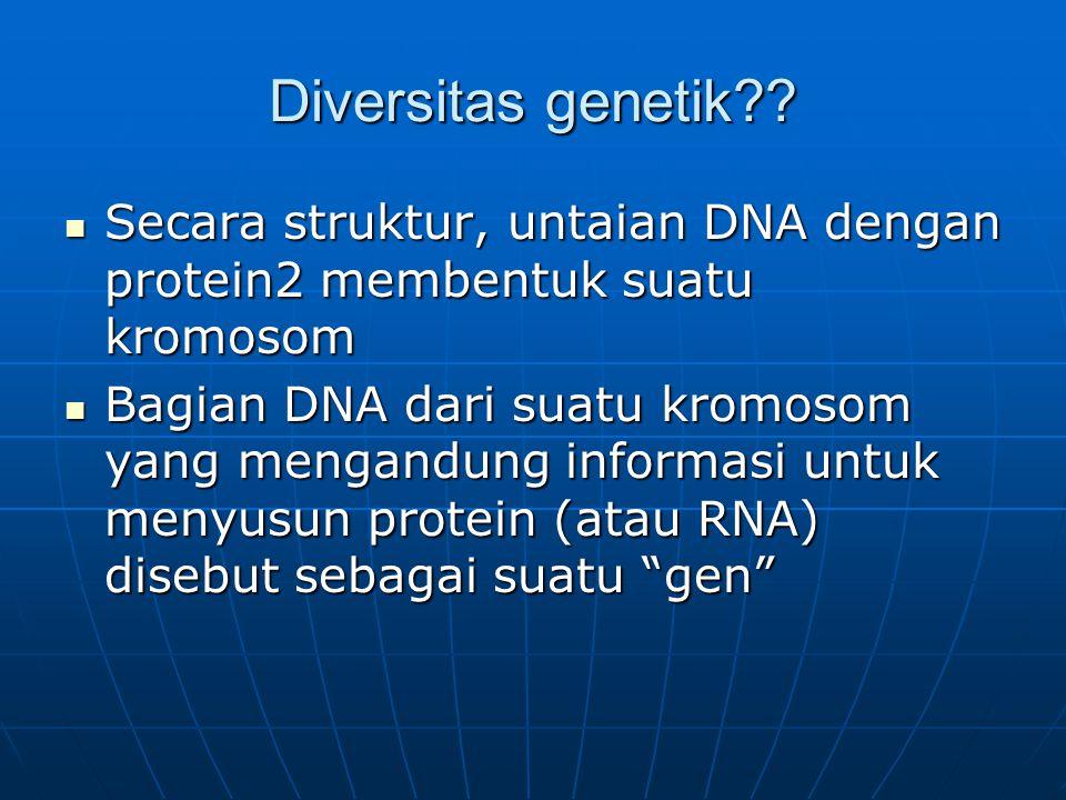 Diversitas genetik Secara struktur, untaian DNA dengan protein2 membentuk suatu kromosom.