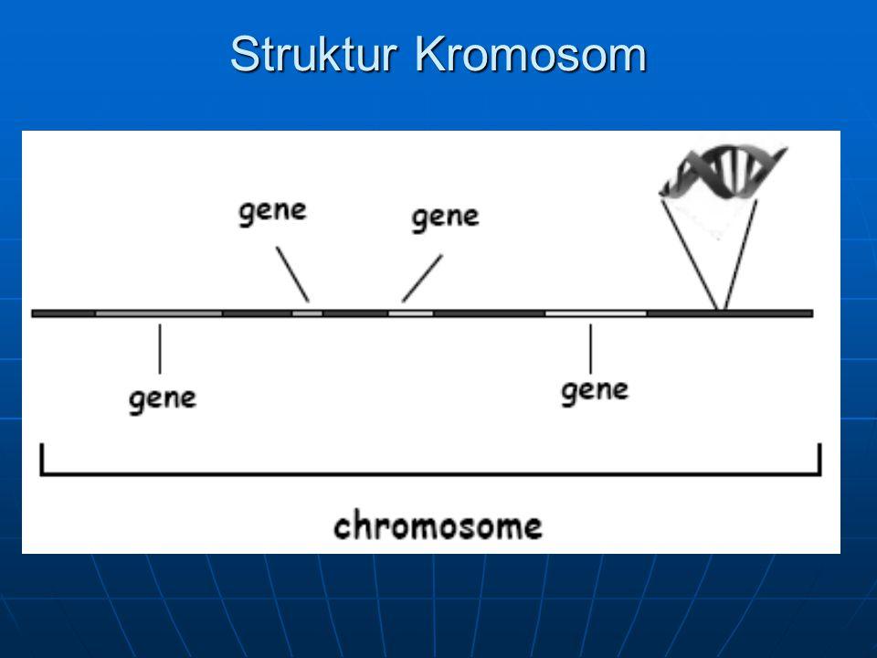 Struktur Kromosom