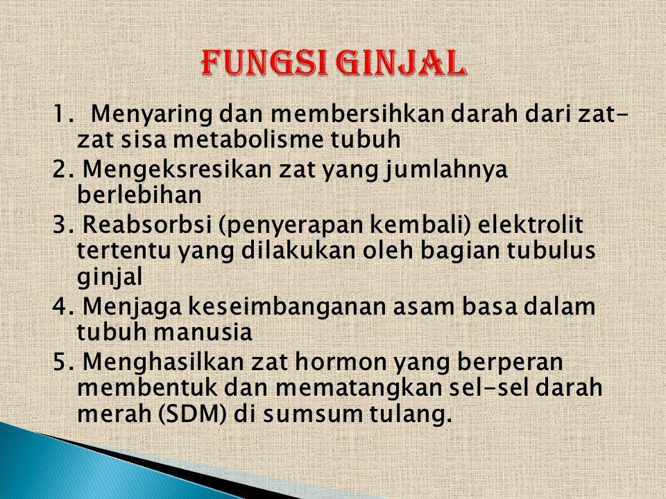 FUNGSI GINJAL