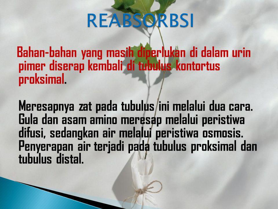 REABSORBSI
