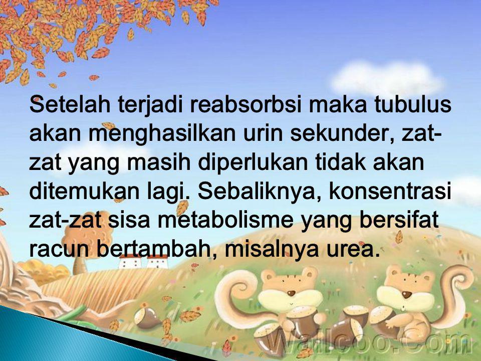 Setelah terjadi reabsorbsi maka tubulus akan menghasilkan urin sekunder, zat-zat yang masih diperlukan tidak akan ditemukan lagi.