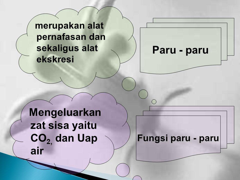 Mengeluarkan zat sisa yaitu CO2, dan Uap air