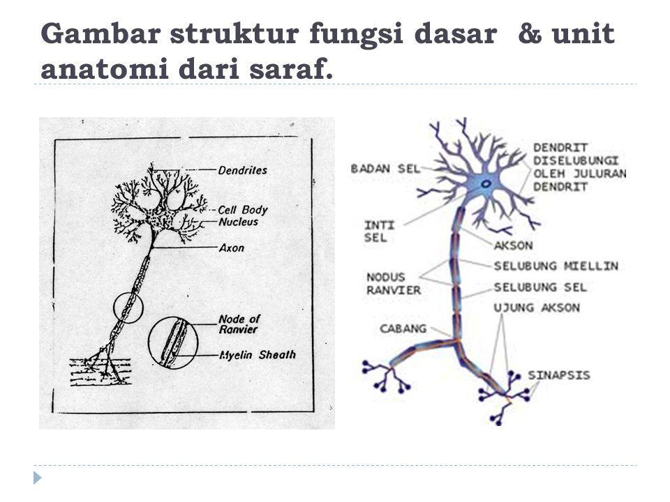Gambar struktur fungsi dasar & unit anatomi dari saraf.
