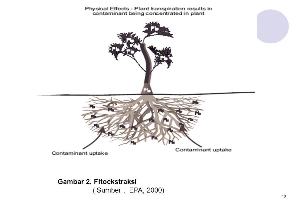 Gambar 2. Fitoekstraksi ( Sumber : EPA, 2000)
