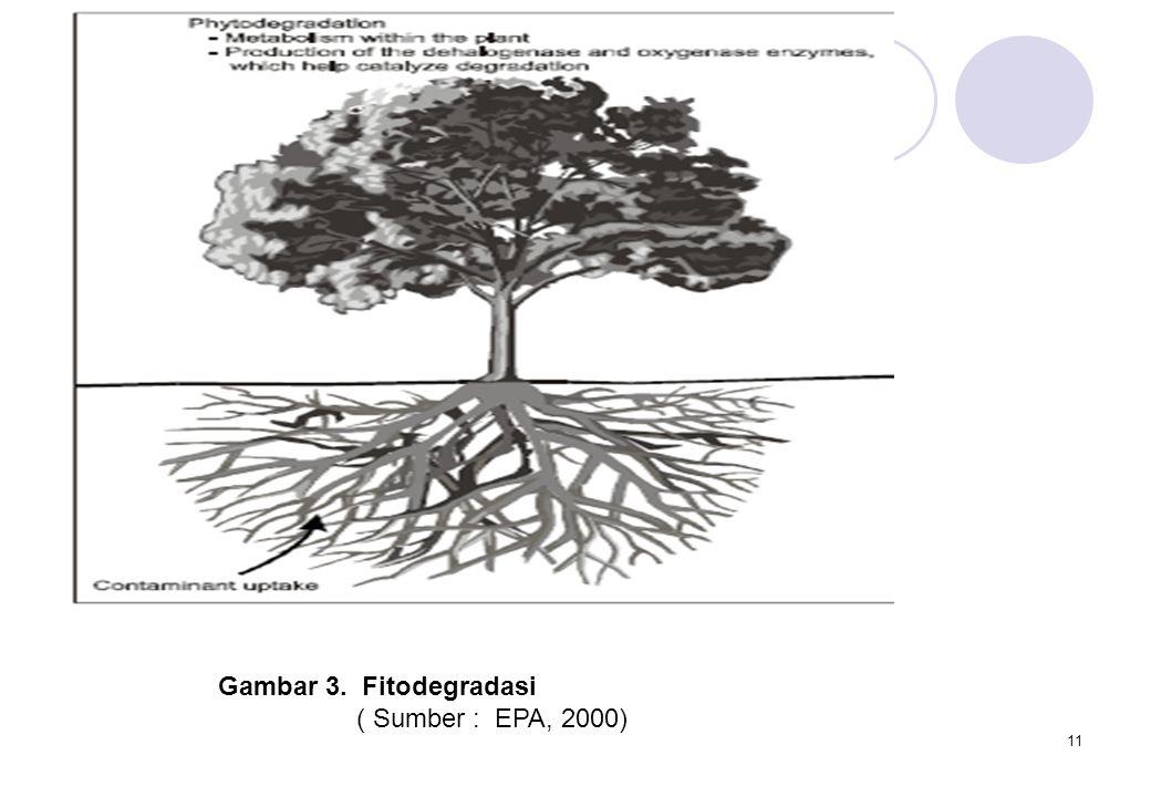Gambar 3. Fitodegradasi ( Sumber : EPA, 2000)