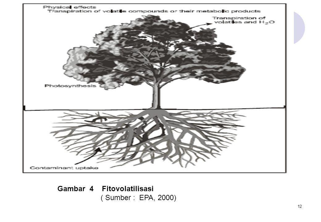 Gambar 4 Fitovolatilisasi