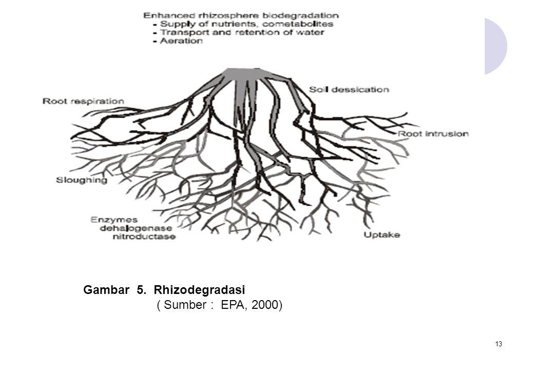 Gambar 5. Rhizodegradasi