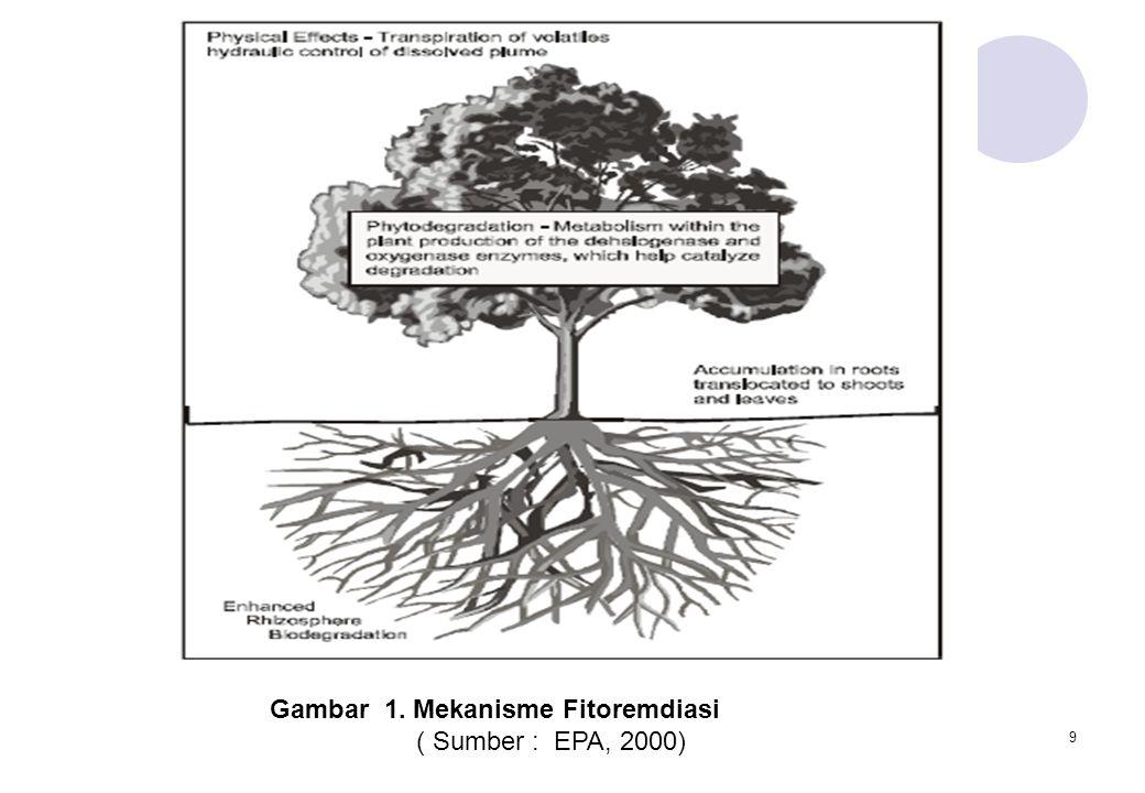 Gambar 1. Mekanisme Fitoremdiasi