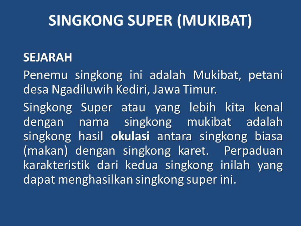 SINGKONG SUPER (MUKIBAT)