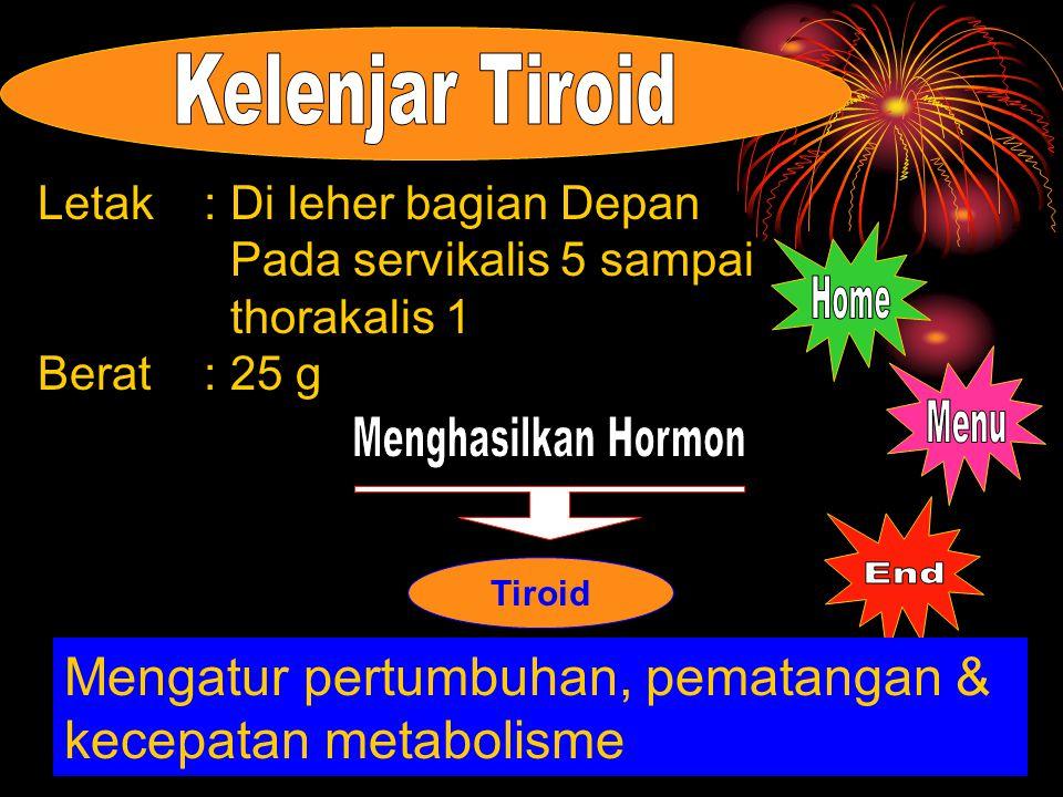 Mengatur pertumbuhan, pematangan & kecepatan metabolisme