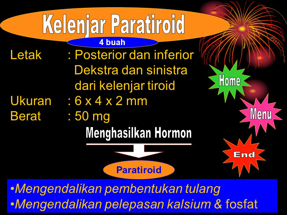 Kelenjar Paratiroid Home Menu Menghasilkan Hormon End
