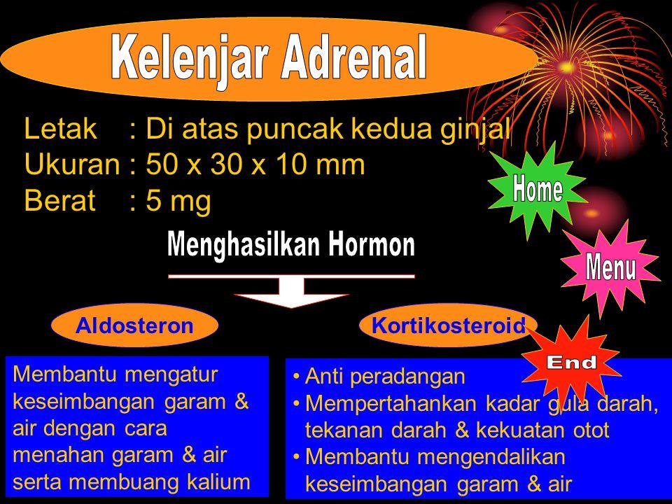 Kelenjar Adrenal Home Menghasilkan Hormon Menu End