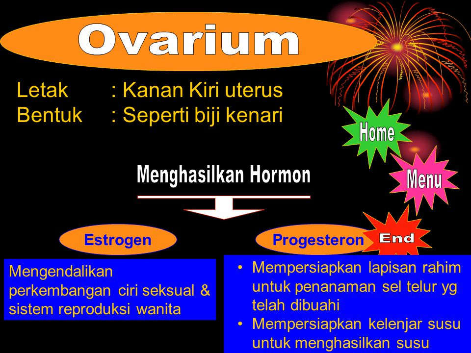 Ovarium Home Menghasilkan Hormon Menu End Letak : Kanan Kiri uterus