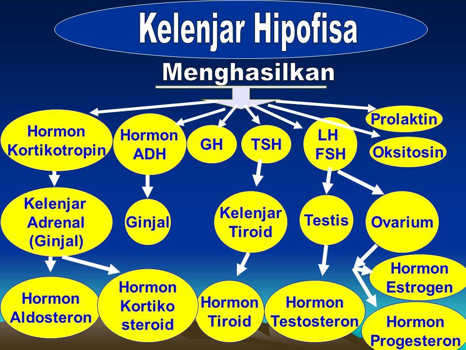 Kelenjar Hipofisa Menghasilkan Prolaktin Hormon Kortikotropin Hormon