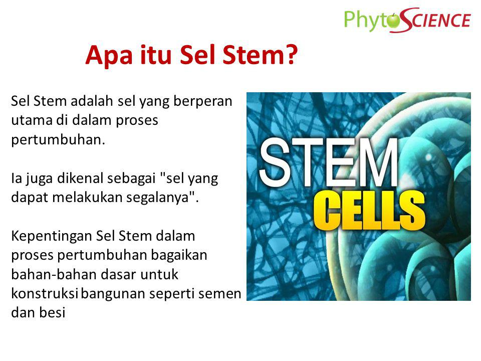 Apa itu Sel Stem Sel Stem adalah sel yang berperan utama di dalam proses pertumbuhan. Ia juga dikenal sebagai sel yang dapat melakukan segalanya .