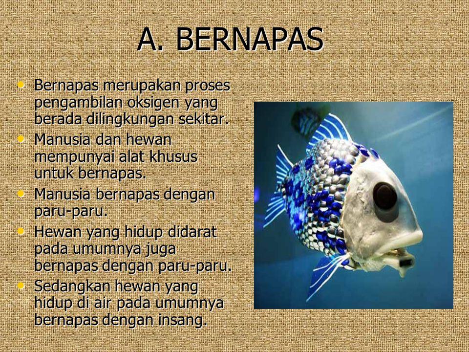 A. BERNAPAS Bernapas merupakan proses pengambilan oksigen yang berada dilingkungan sekitar. Manusia dan hewan mempunyai alat khusus untuk bernapas.
