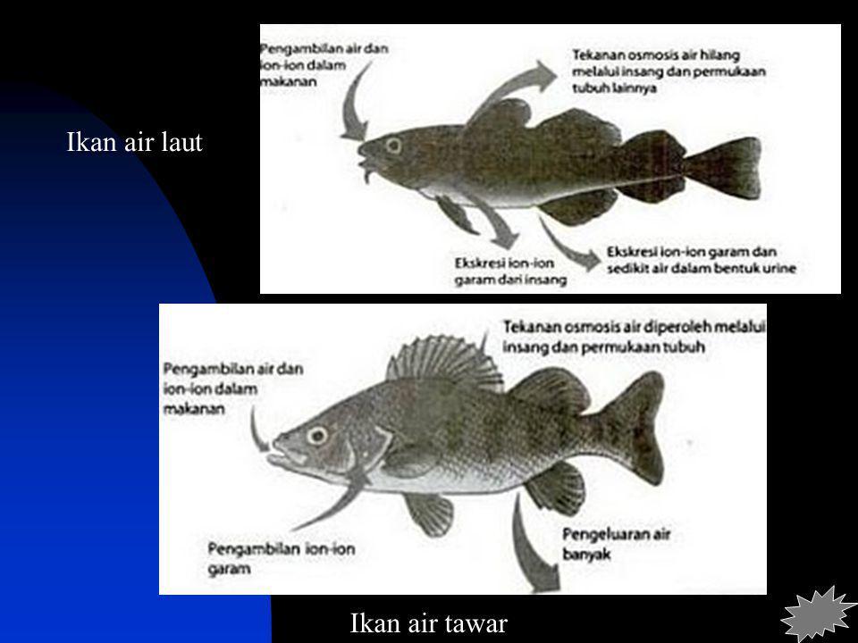 Ikan air laut Ikan air tawar