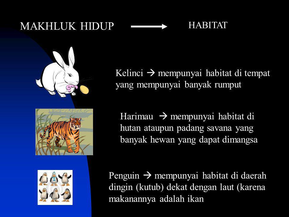 MAKHLUK HIDUP HABITAT. Kelinci  mempunyai habitat di tempat yang mempunyai banyak rumput.