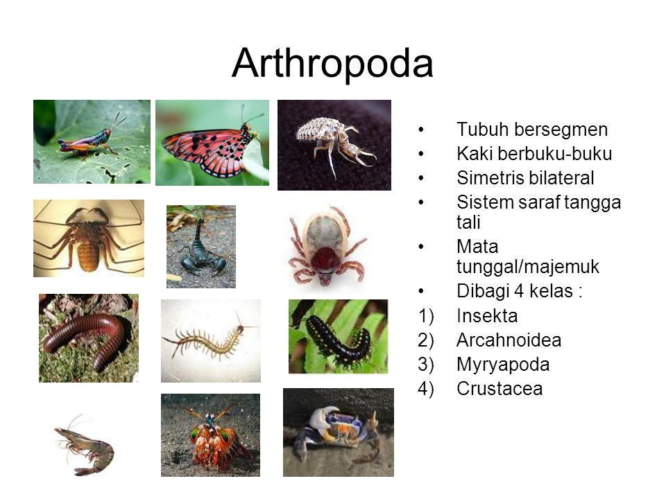 Arthropoda Tubuh bersegmen Kaki berbuku-buku Simetris bilateral