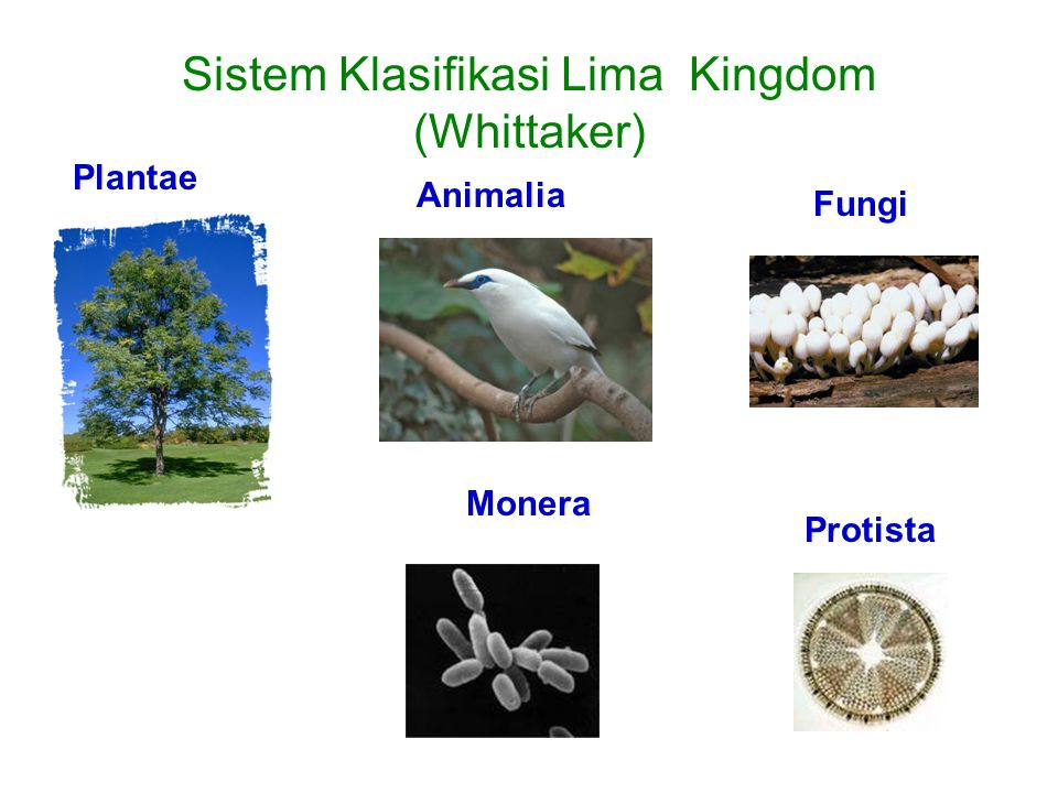 Sistem Klasifikasi Lima Kingdom (Whittaker)