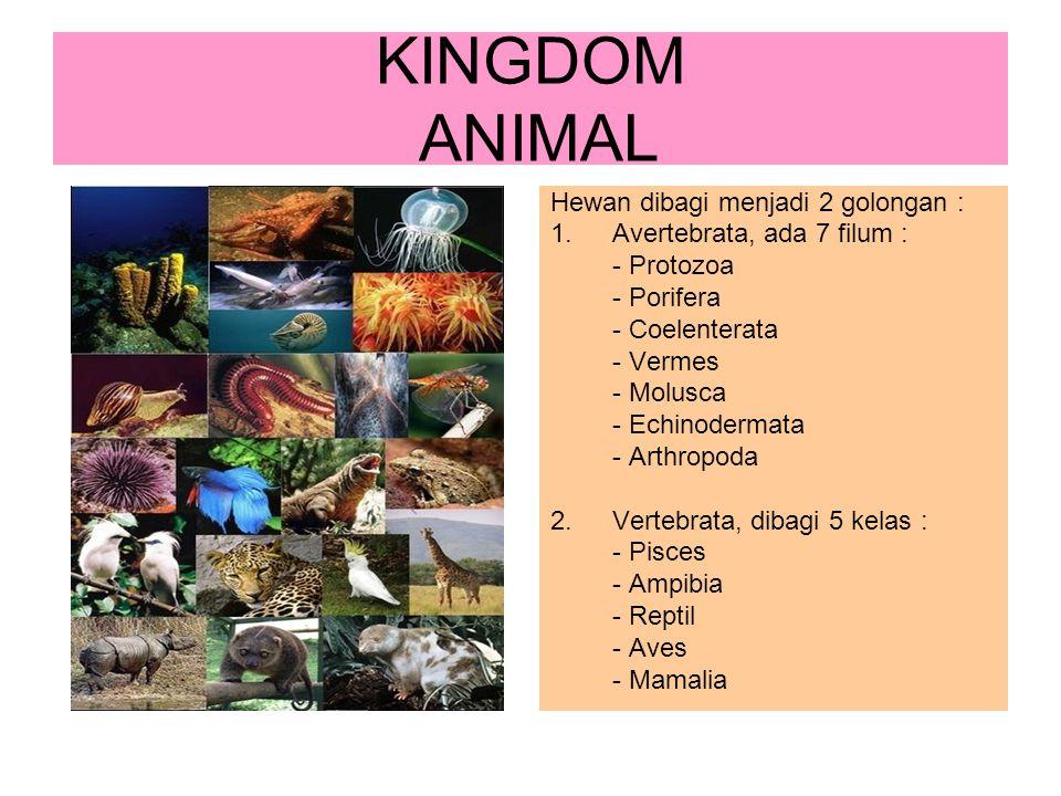 KINGDOM ANIMAL Hewan dibagi menjadi 2 golongan :