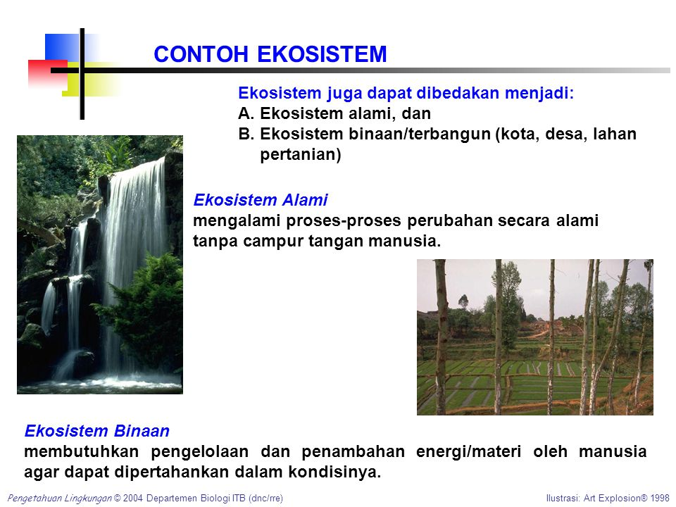 CONTOH EKOSISTEM Ekosistem juga dapat dibedakan menjadi: