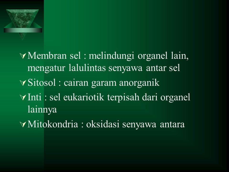 Membran sel : melindungi organel lain, mengatur lalulintas senyawa antar sel