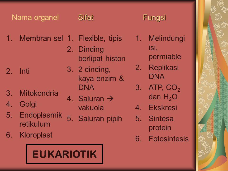 EUKARIOTIK Nama organel Sifat Fungsi Membran sel Inti Mitokondria