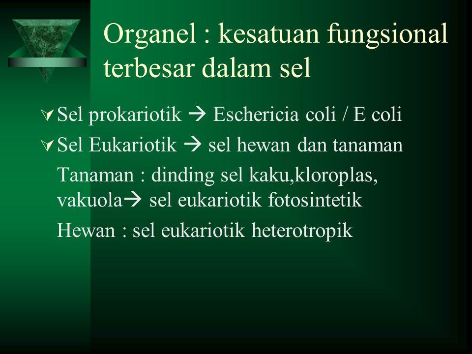 Organel : kesatuan fungsional terbesar dalam sel