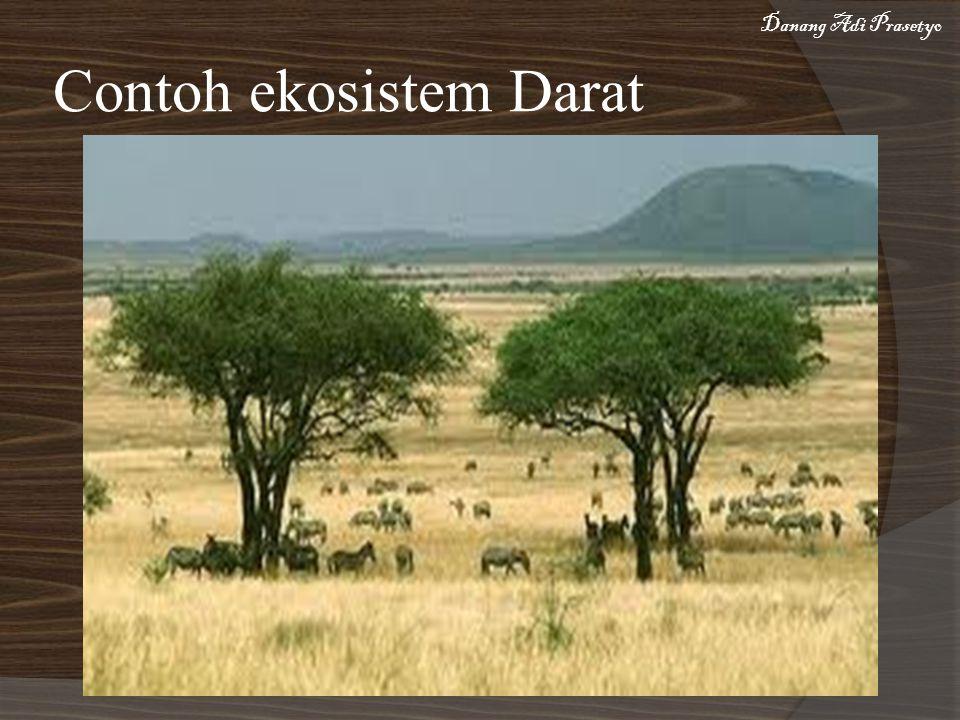 Contoh ekosistem Darat