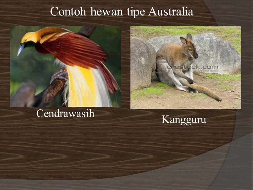 Contoh hewan tipe Australia