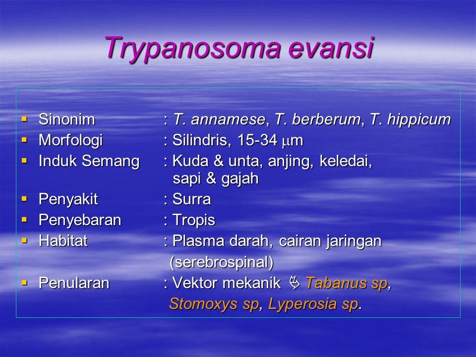 Trypanosoma evansi Sinonim : T. annamese, T. berberum, T. hippicum