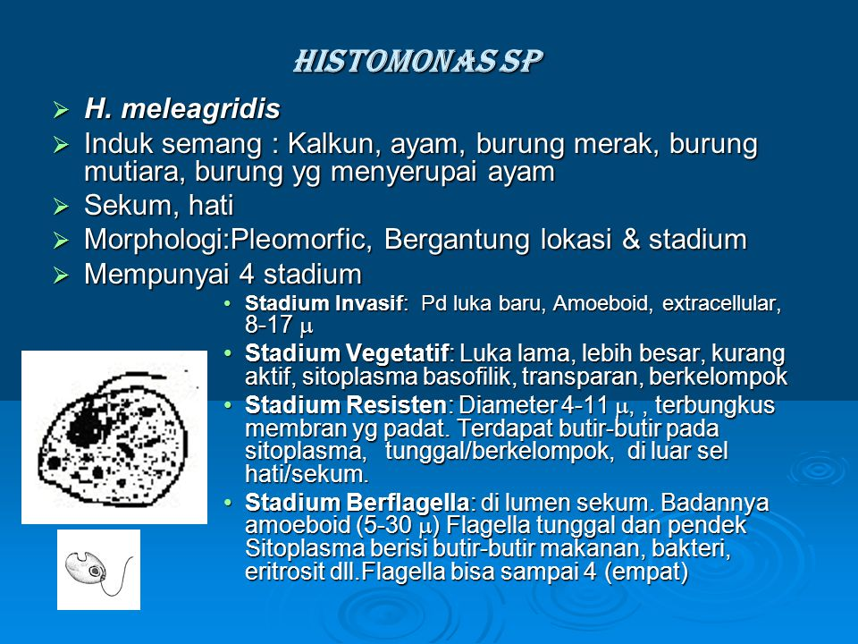 Histomonas sp H. meleagridis