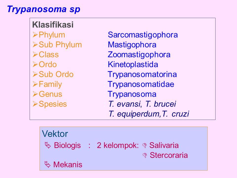  Biologis : 2 kelompok:  Salivaria