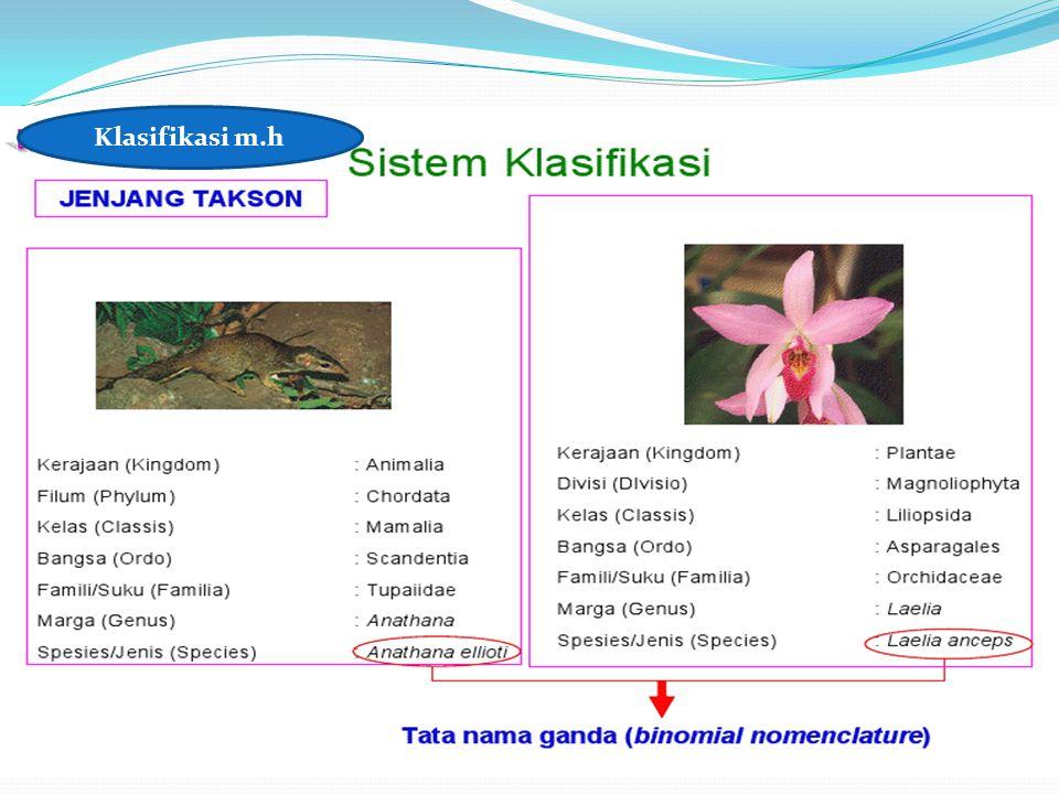 Klasifikasi m.h